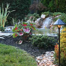 Lawns, Plants & Water Features